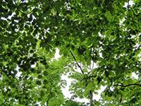 上林森林公園イメージ